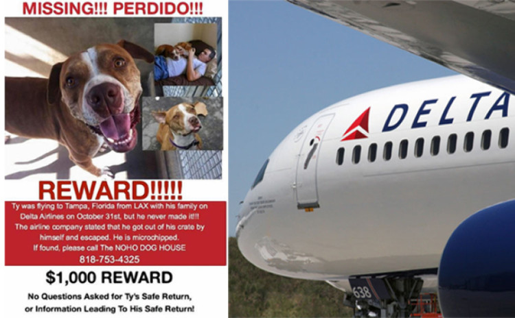 delta airlines will not make pets fly as cargo anymoredelta airlines will not make pets fly as cargo anymore