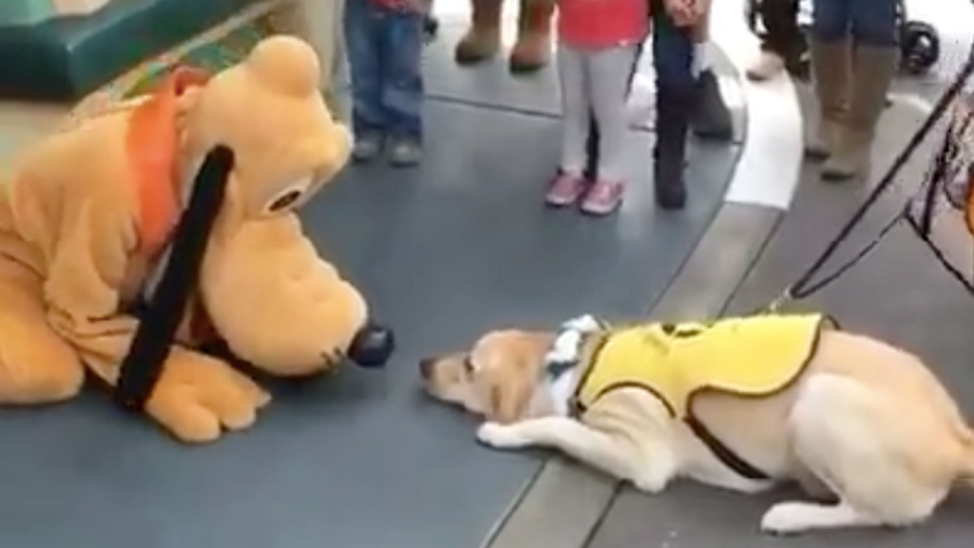 Service Dog S Day Is Made When He Meets Pluto At
